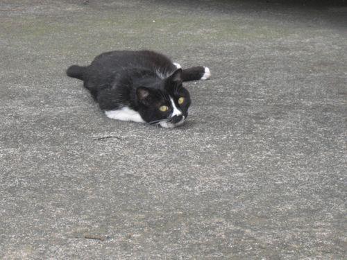 隣のアパート1階駐車場で寝ていた 'バットマン'。ココで寝ているとき
