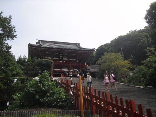 04) 鎌倉「鶴岡八幡宮」倒壊した大銀杏その後