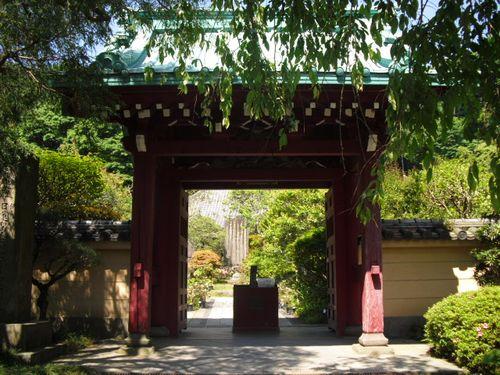 01) 鎌倉「光則寺」ヤマアジサイの季節