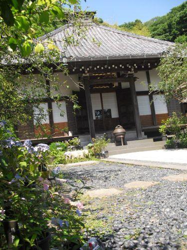 03) 鎌倉「光則寺」ヤマアジサイの季節