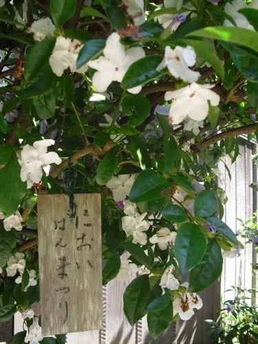 27) 鎌倉「光則寺」ヤマアジサイの季節