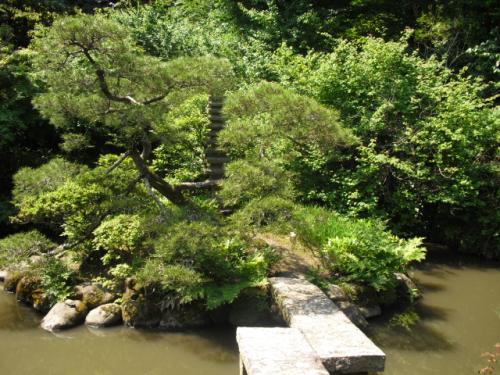 31) 鎌倉「光則寺」ヤマアジサイの季節