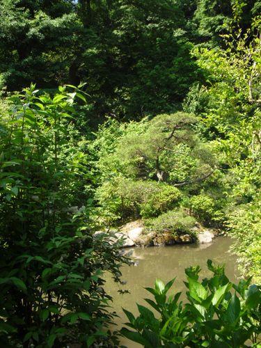 32) 鎌倉「光則寺」ヤマアジサイの季節