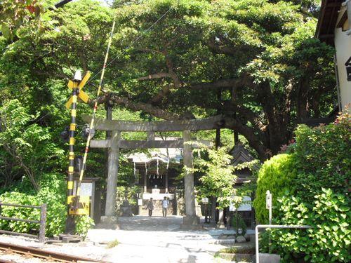 02) 鎌倉「御霊神社」ヤマアジサイ咲く頃_10.06.03