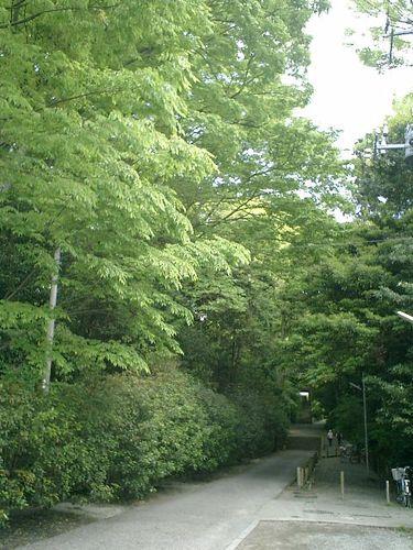 01) 日蓮宗「長興山 妙本寺」_鎌倉市大町