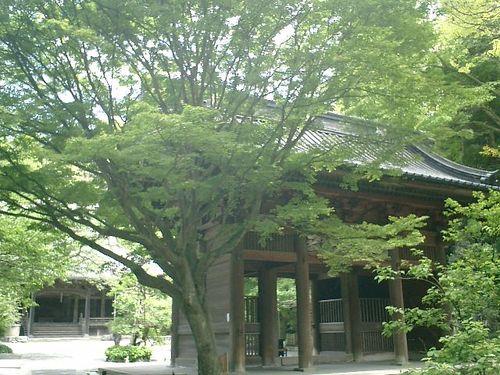03) 日蓮宗「長興山 妙本寺」_鎌倉市大町