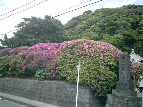 01) 「安養院」_鎌倉市大町