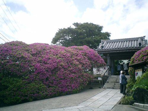 02) 浄土宗「祇園山 安養院田代寺」