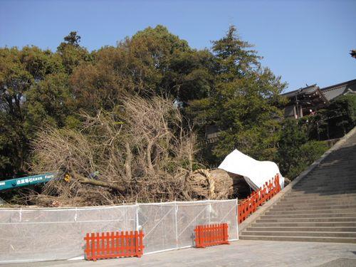 02) 鎌倉「鶴岡八幡宮」