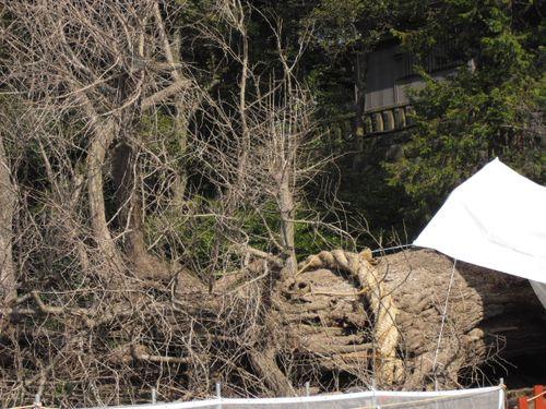 03) 鎌倉「鶴岡八幡宮」
