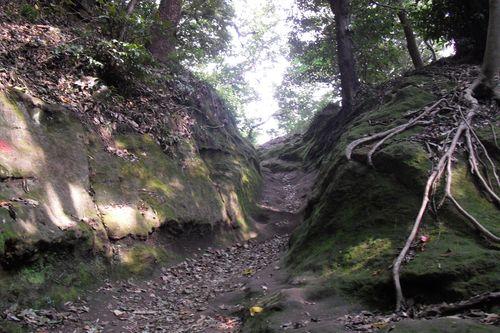 03)_鎌倉「天園ハイキング・コース」_12:51pm