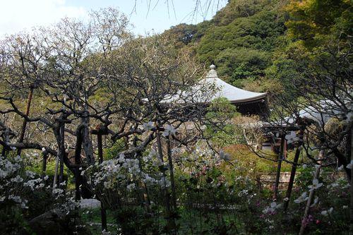 02) 鎌倉市二階堂「瑞泉寺」