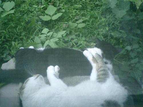 庭への出入り用ブロックを二段ベッドにして寝る 'ジョン・ケイ'&'ひ