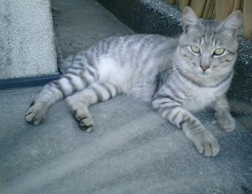 01) 'クリス・スペディング'(本名 'ツイリー')特別な愛猫家という