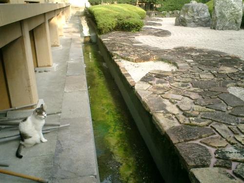 03) 低い位置から石庭鑑賞する 'ジャック・ブルース'(本名 'ハスキー