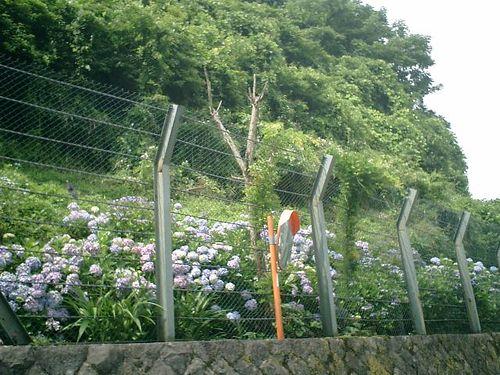 02) 写真01)の右隣り。以前に、金網柵へ梯子を掛けて 向こう側へ降りて整