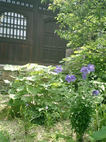 23) 鎌倉市二階堂「瑞泉寺」 夏