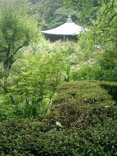 31) 鎌倉市二階堂「瑞泉寺」 夏