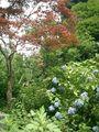06) 鎌倉市二階堂「瑞泉寺」 夏