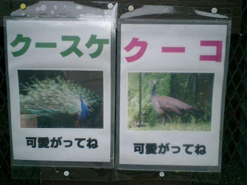 07) 孔雀の名札