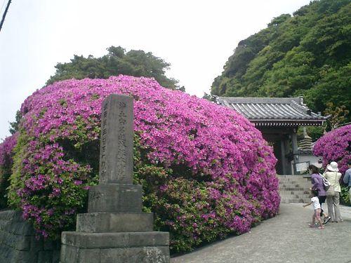 02) 鎌倉市大町「安養院」