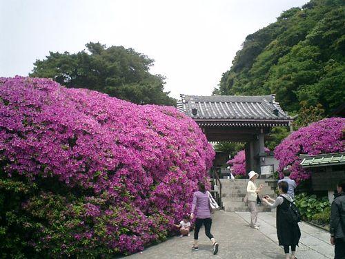 03) 鎌倉市大町「安養院」