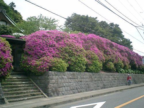 04) 鎌倉市大町「安養院」