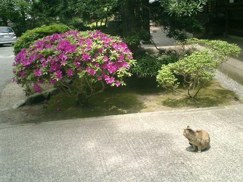 01) 「本堂」前の猫