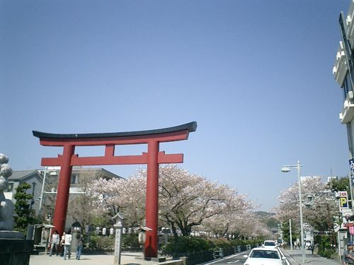 """01) 鎌倉市雪ノ下「鶴岡八幡宮」""""段葛""""桜の季節"""