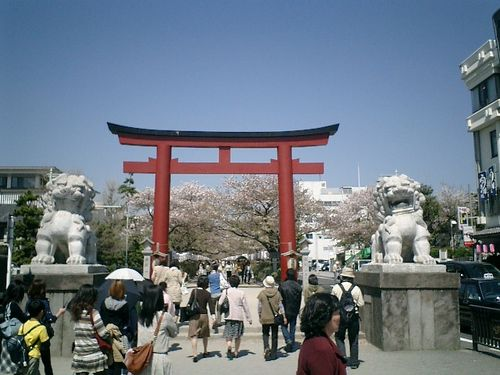 """04) 鎌倉市雪ノ下「鶴岡八幡宮」""""段葛""""桜の季節"""