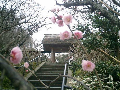 02) 鎌倉市山ノ内「東慶寺」梅の季節