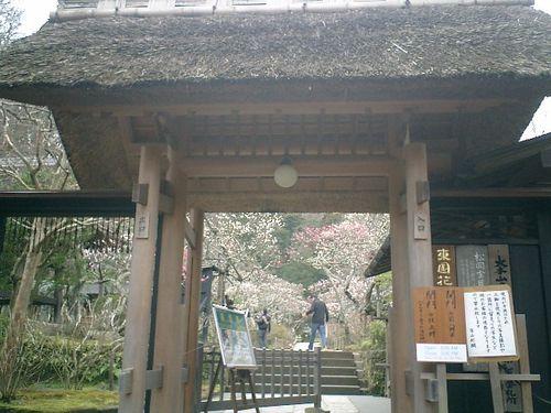 03) 鎌倉市山ノ内「東慶寺」梅の季節