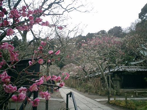 05) 鎌倉市山ノ内「東慶寺」梅の季節