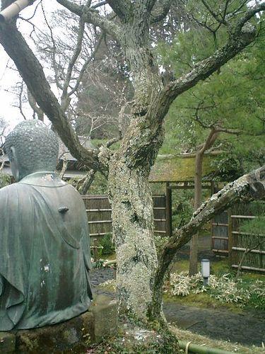 08) 鎌倉市山ノ内「東慶寺」梅の季節