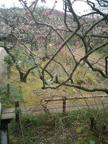 14) 鎌倉市山ノ内「東慶寺」梅の季節