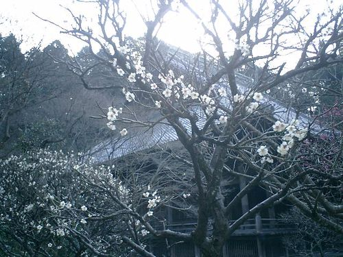 04) 09.02.10鎌倉「妙本寺」