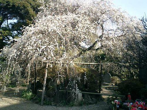 07) 09.02.10鎌倉「宝戒寺」