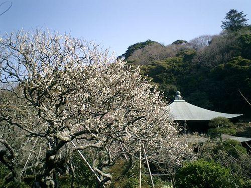 06) 09.02.10鎌倉「瑞泉寺」