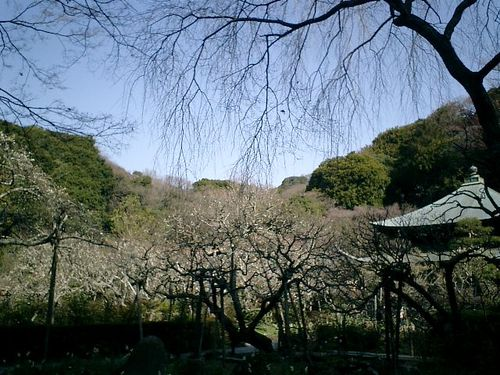 12) 09.02.10鎌倉「瑞泉寺」
