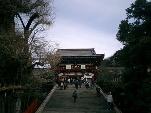 04) 鎌倉市雪ノ下「鶴岡八幡宮」 大銀杏と本殿への階段