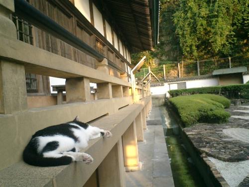 07)縁側へ上がるのが面倒だったので、寝ている 'デイブ平尾'(本名 '