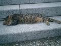 09)合祀墓階段で寝る 'ケネス伊東'(本名 'シーザー')。夏仕様?の