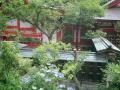 04)鎌倉「荏柄天神社」紫陽花の季節