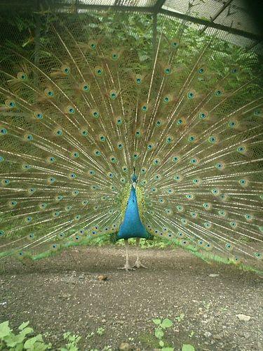 05)鎌倉市長谷「光則寺」この羽も、冬には抜け落ちる。