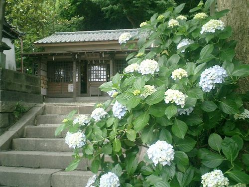 02) 鎌倉「五所神社」 アジサイの頃