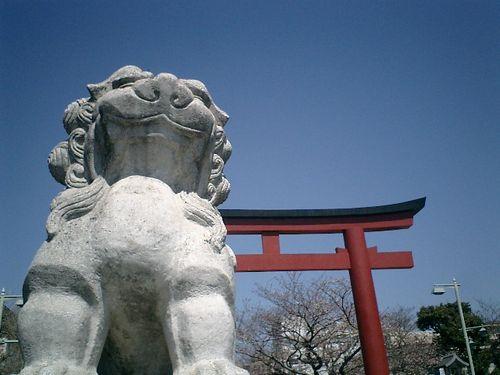 03) 「鶴岡八幡宮」'二の鳥居'&'段葛'の桜