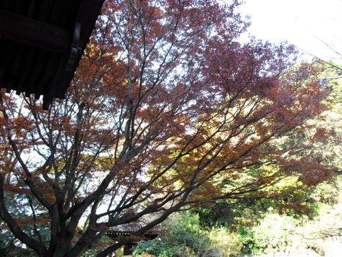 02) 09.12.02鎌倉市大町「妙本寺」 冬
