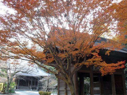 07) 09.12.02鎌倉市大町「妙本寺」 冬
