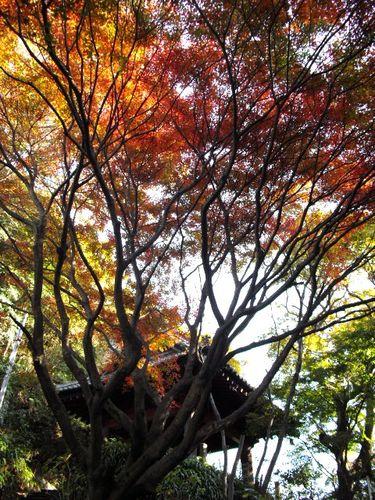 08) 09.12.02鎌倉市大町「妙本寺」 冬