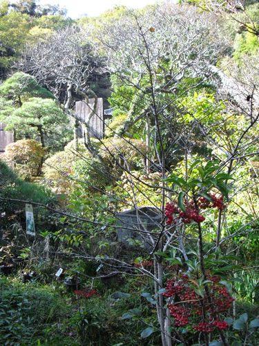 05) 鎌倉「光則寺」_冬